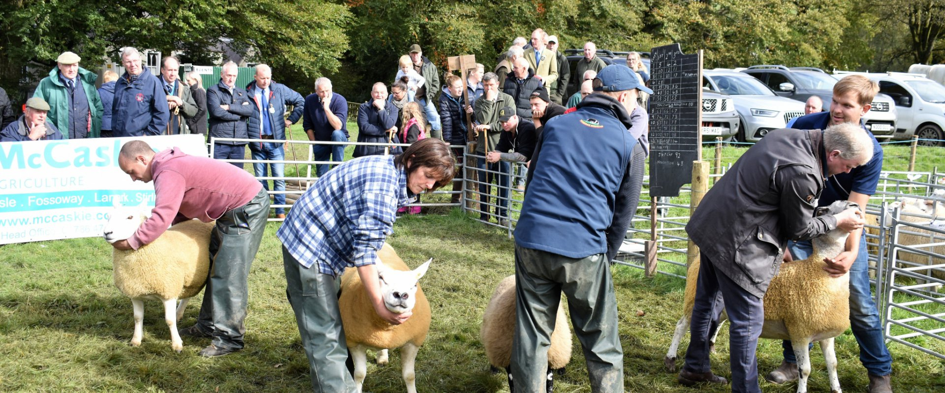 Inter Sheep Judging